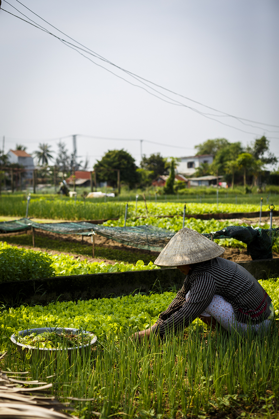 Vietnamese farmer at the Tra Que Village